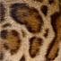 Meinebengal Bengalkatzen